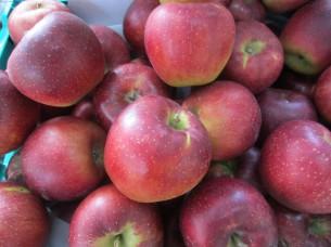 今年収穫したフレッシュなリンゴが美味しい季節になりました