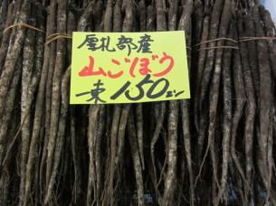 モロアザミの根を「山ごぼう」といい、今が、まさしく旬です
