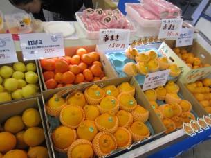 天草産の柑橘類は、どれも上質で美味しいですよ