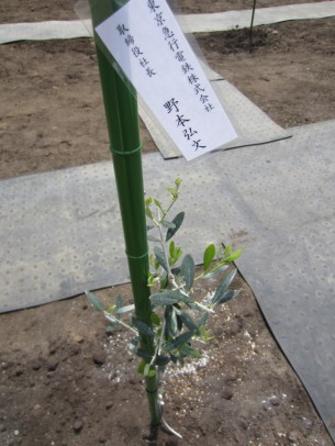 0稲取植樹祭12